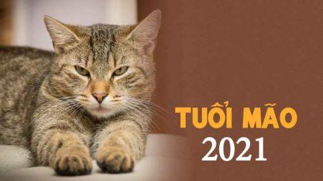 Màu sắc may mắn của tuổi Mão năm 2021: Màu hồng bảo lãnh tình yêu