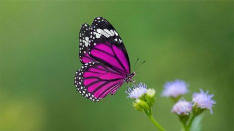 mơ thấy mình đuổi theo một con bướm